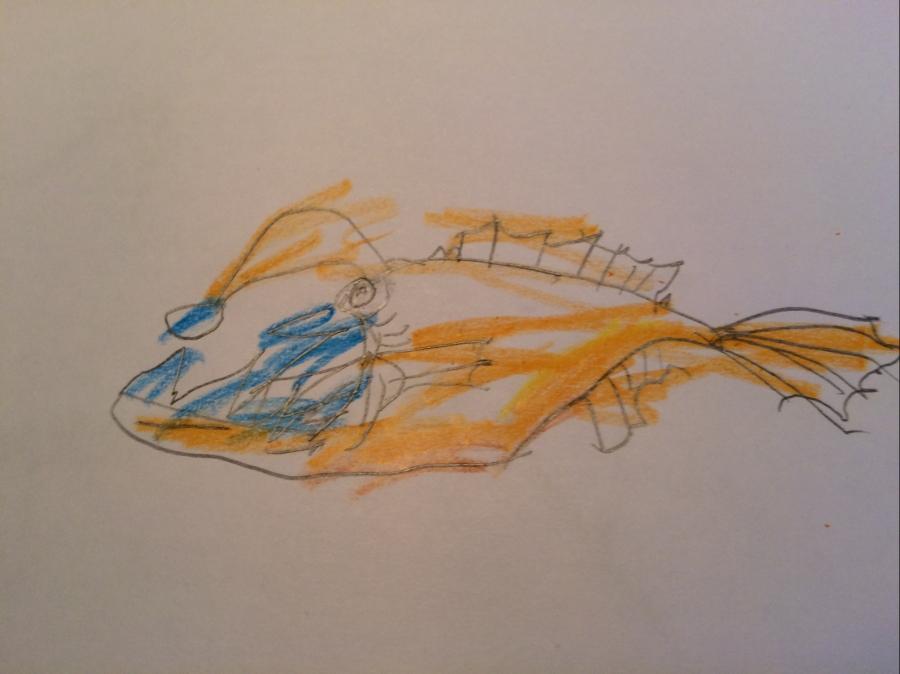 child's angler fish drawing